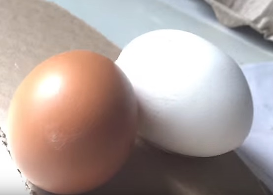 два яйца рядом