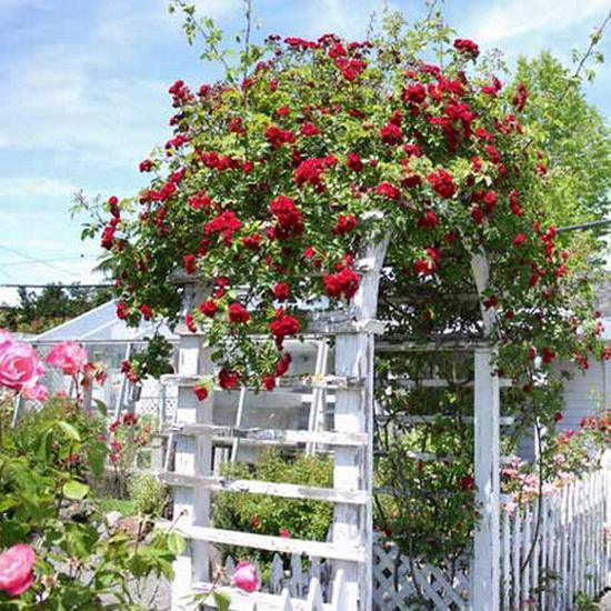 garden-design-ideas-arches-arbors-archways-5
