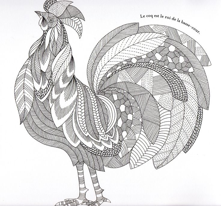 1389305-rooster-number-coloring-pages