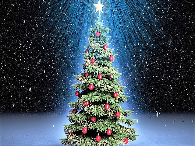 beautiful_christmas_trees_06-2