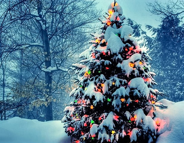 christmas-tree-with-lights-in-nature-image-2