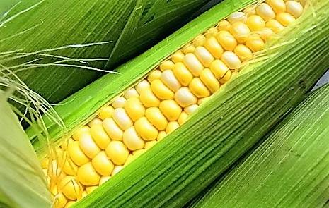 Зерна кукурузы для смузи