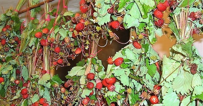 народная медицина советует - ягоды земляники