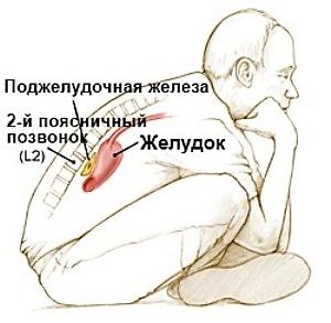 С какой стороны поджелудочная железа у человека?