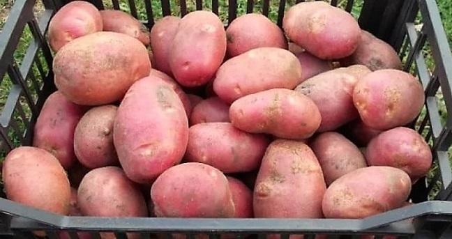 картошка для лечения поджелудочной железы