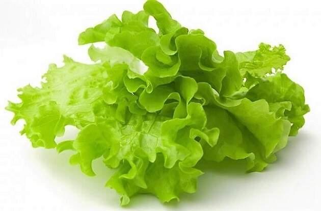 салаты зеленые