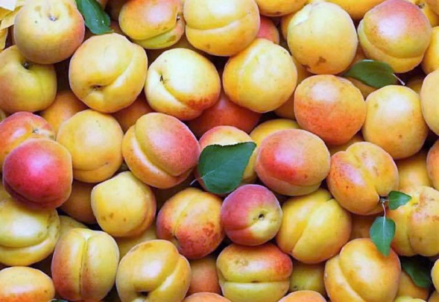 абрикосы без косточек