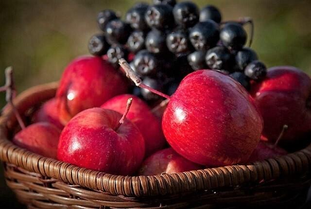 яблоки и рябина черная