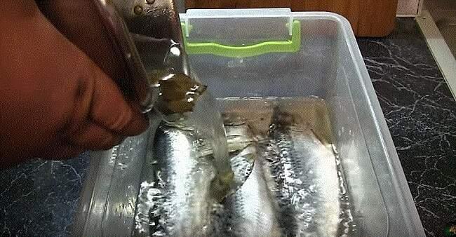 заливка рыбы маринадом