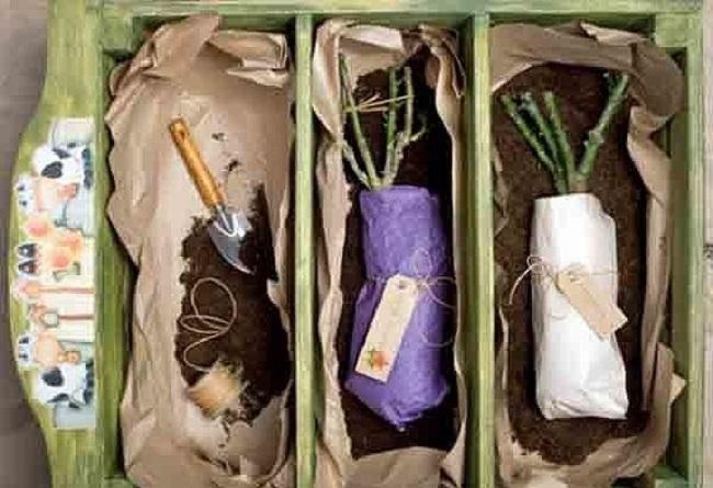 укрыть розы в пакеты