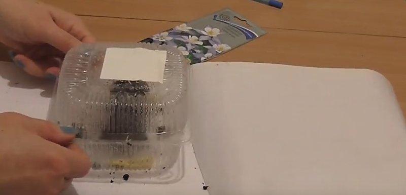 закрытая коробочка с семенами
