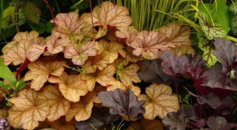 листья на растении