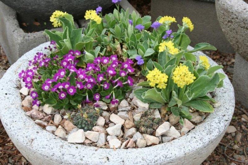 цветы в чаше