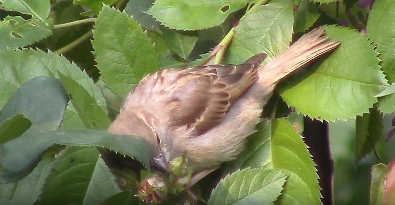 птица ест тлю