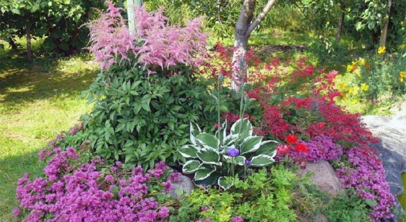 цветы на фоне дерева
