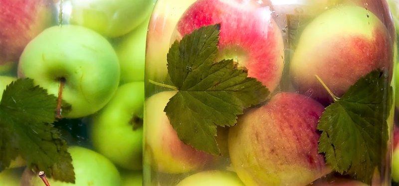 яблоки можно есть