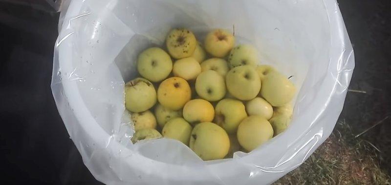 1 ряд яблок в ведре