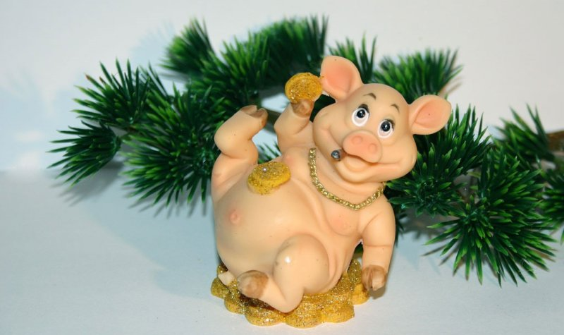 деньги у свиньи