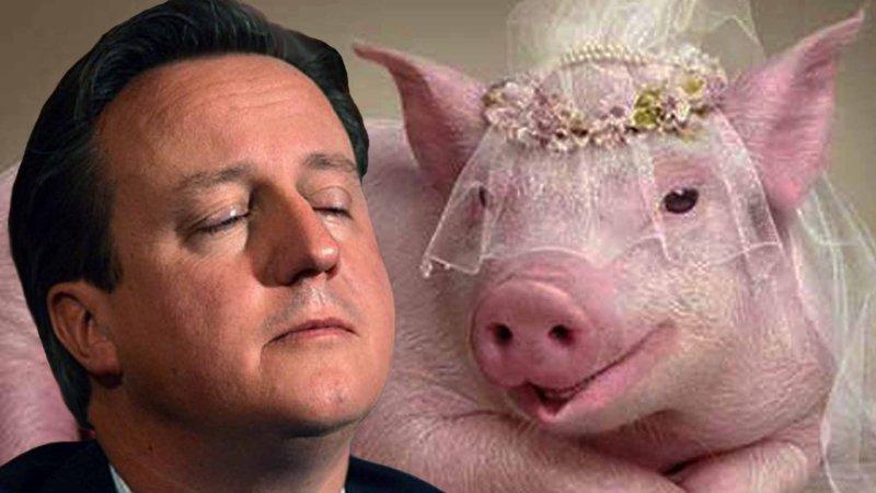 свинья любит мужа