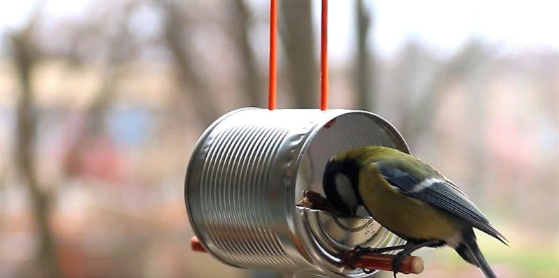птичка клюет корм