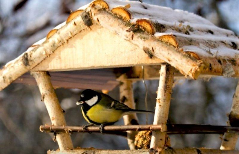 птичка в столовой