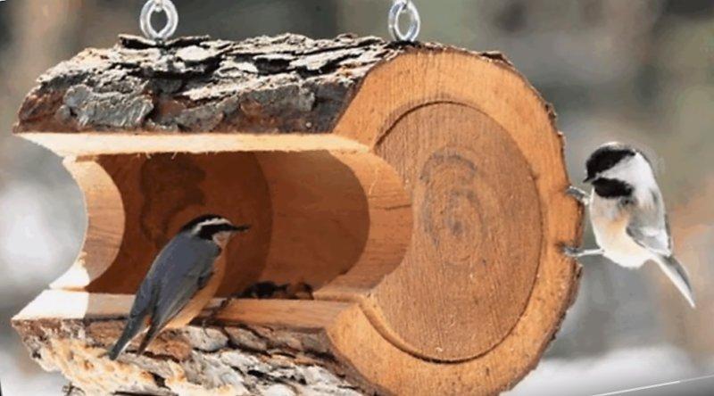 птичка у кормушки