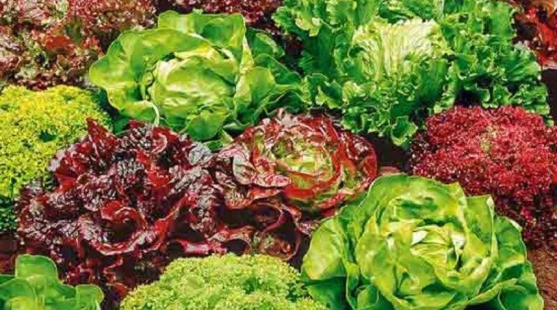 разный салат