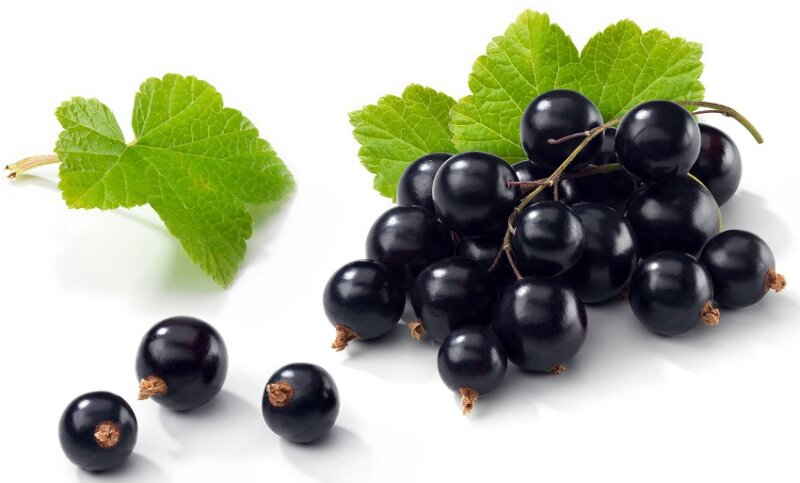 черная смородина - ягоды