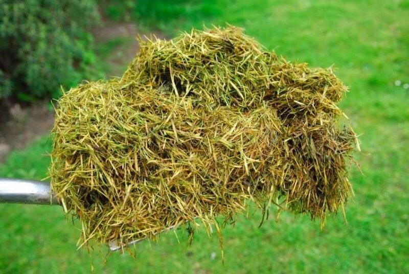 трава сухая