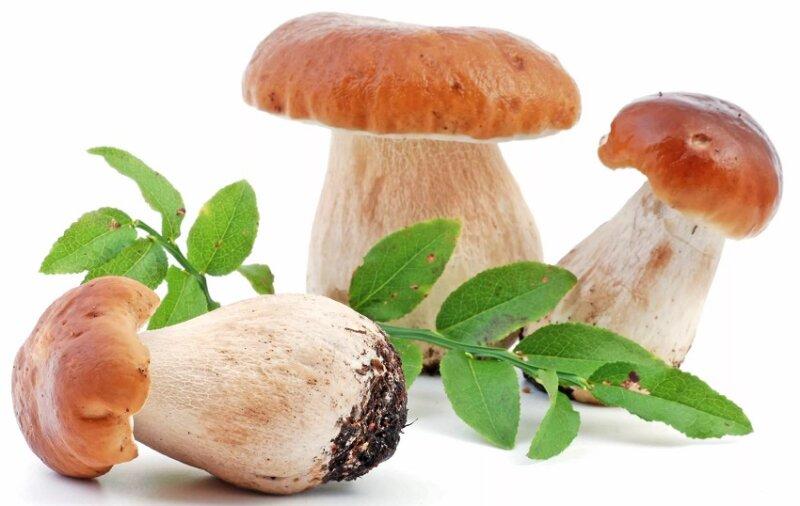 закуска на зиму с грибами