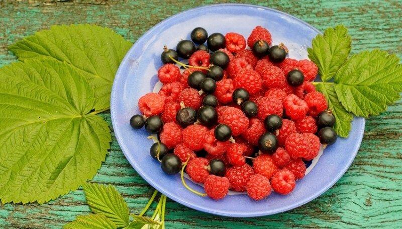 ягоды малины и смородины
