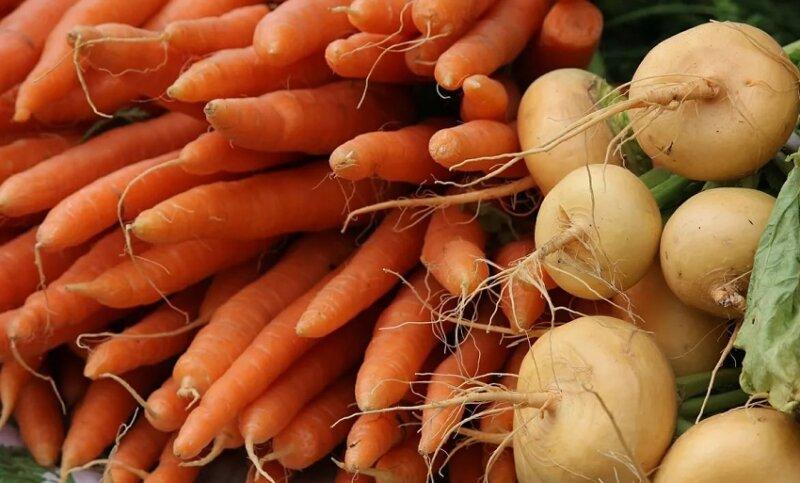 морковь и репа
