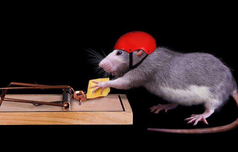 новогодние картинки с мышкой - новогодние картинки