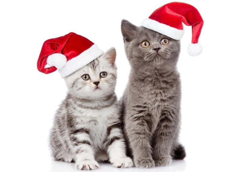 новогодние картинки с кошками