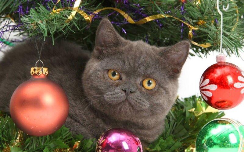 крутая кошка с игрушками - новогодние картинки