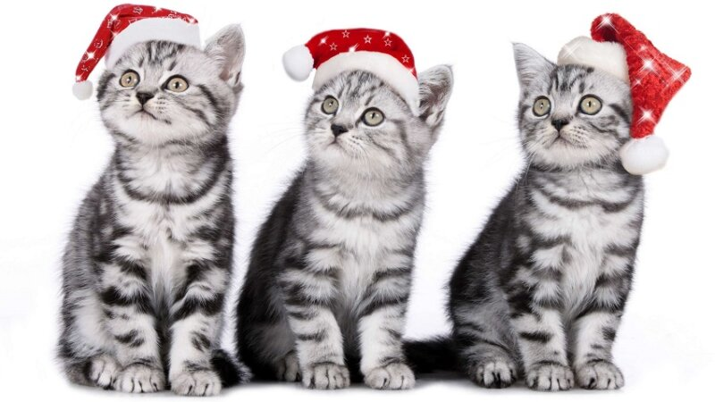 новогодние котята - новогодние картинки