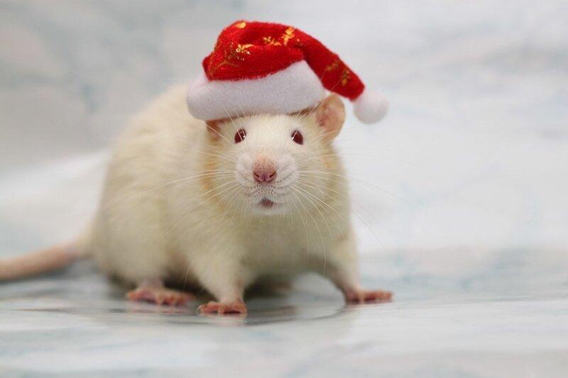 мышка в шапке