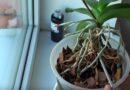 Пересадка орхидеи после цветения в домашних условиях
