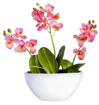 горшок с орхидеей