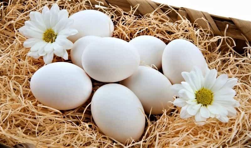 яйца с ромашками