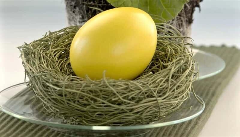 желтое яйцо в гнезде