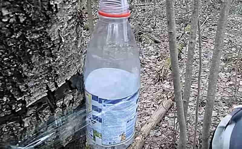 Бутылка со скотчем на дереве