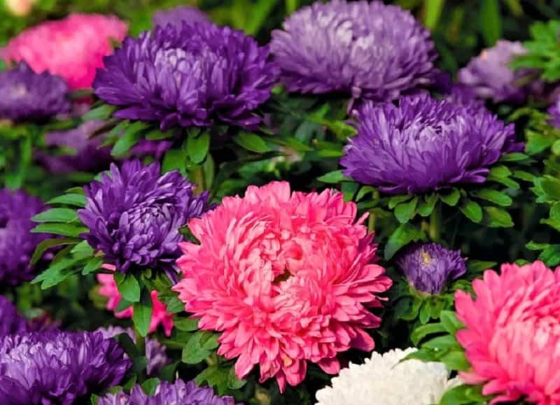 выпуклые цветы