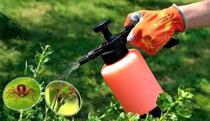 опрыскивание раствором растений