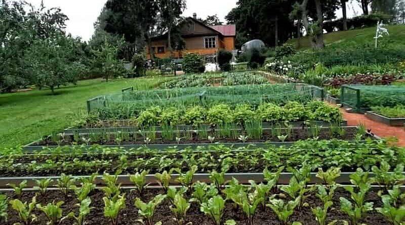 огород с грядками
