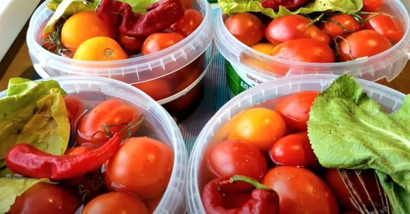 помидоры в ведрах