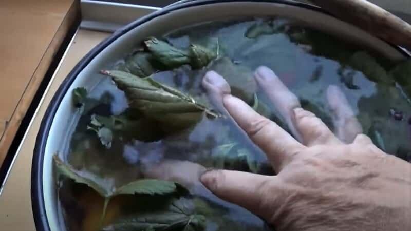 рука жмет зелень
