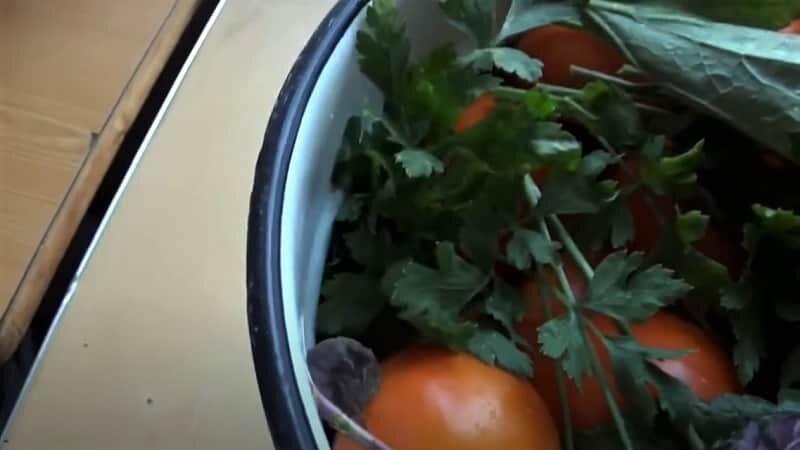 зелень на томатах